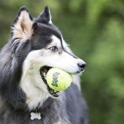 KONG AIRDOG PIŁKI TENISOWE 8 cm - piłki dla psa