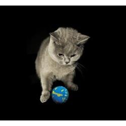 Petstages Fosforyzujące piłeczki zabawka dla kota