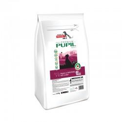 PUPIL Premium Adult Mini bogata w wołowinę